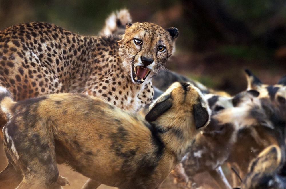 Cấm kinh doanh động vật hoang dã